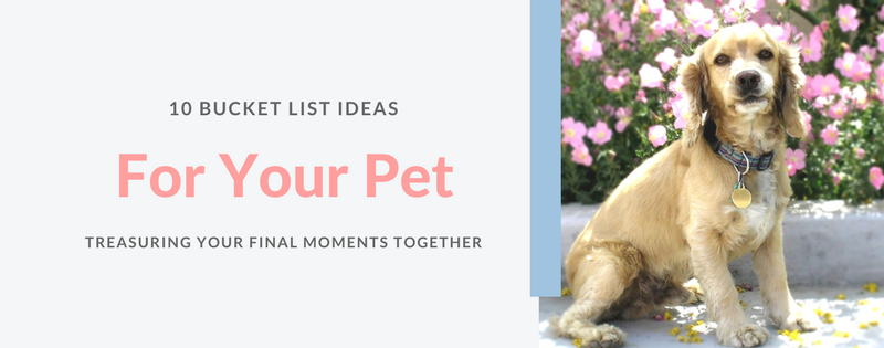 10 Bucket List ideas for your pet