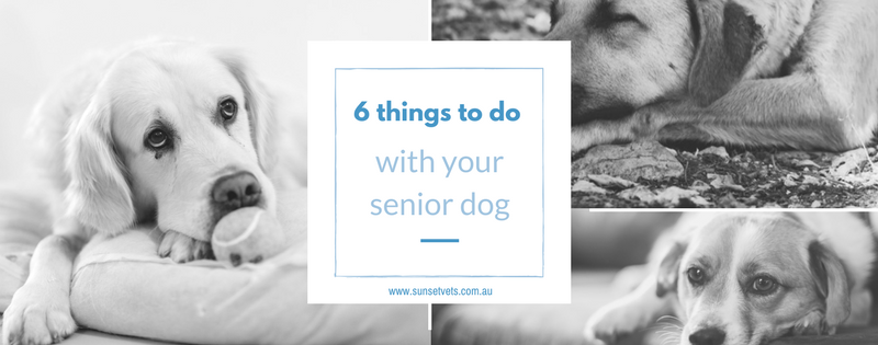 6 things to do with your senior dog