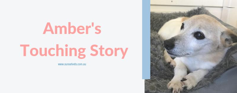 Ambers touching story
