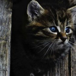 cat-kitten-rozkosne-little