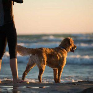 woman-and-dog-on-beach